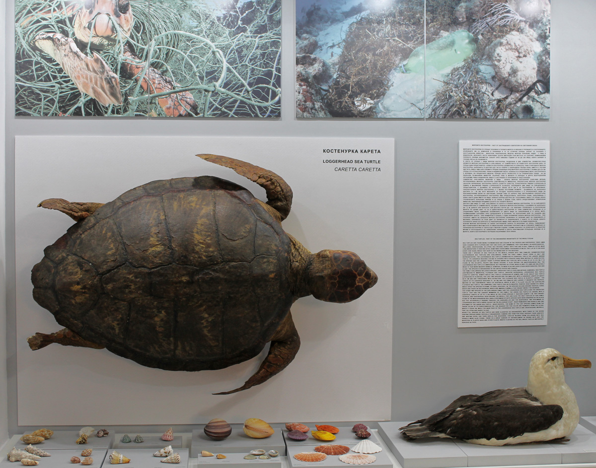 Нова експозиция, посветена на обитателите на Световния океан в Природонаучния музей в Бургас