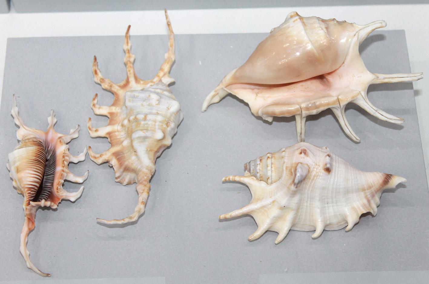 Нова експозиция в Природонаучния музей в Бургас показва непознатите морски обитатели